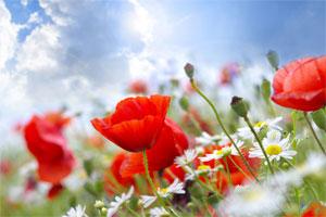 Znaczenie snu kwiaty