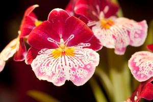 Znaczenie snu orchidea