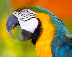 Papuga 14