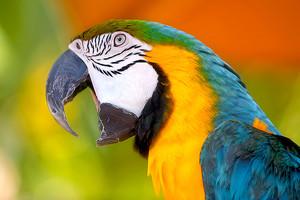Znaczenie snu papuga