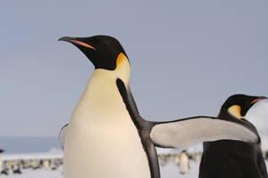 Znaczenie snu pingwin