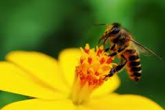 Znaczenie snu pszczoła