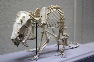 Znaczenie snu szkielet