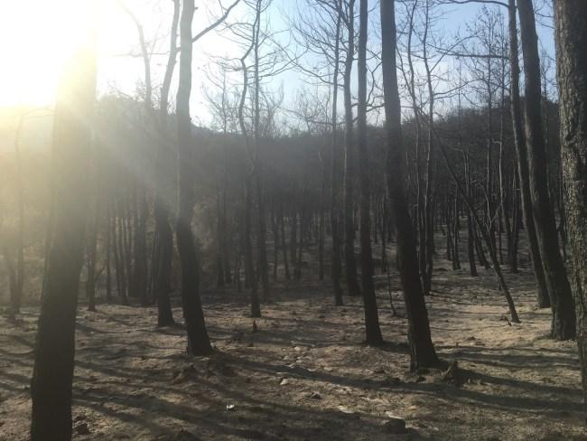 Aralarında yüzlerce yıllık ağaçları da içeren dev bir orman örtüsü olduğu yerde kömüre dönüşmüştü.