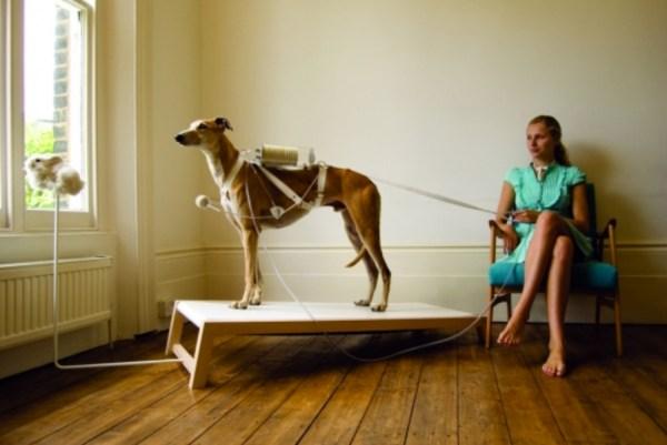 Respiratory-Dog