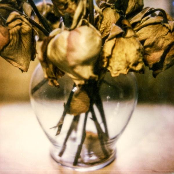 polaroid-glass-flowers007