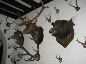 Hunting Trophies, Reichenstein Castle