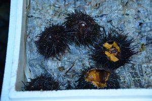 Sea Urchin, Tsukiji Fish Market, Tokyo