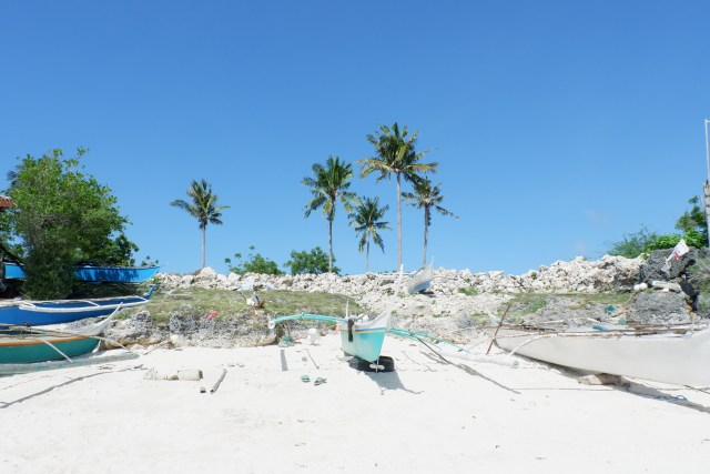 Coconut tress and fishing boats