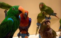 Evoluzione degli Uccelli (5)