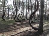 Krzywy Las, Nowe Czarnowo