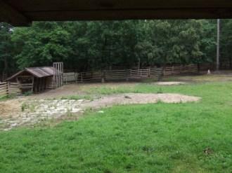 rezerwat żubrów w Międzyzdrojach