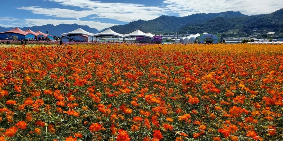 See fields of marigolds and other pretty flowers at the Sea of Flowers in Xinshe.