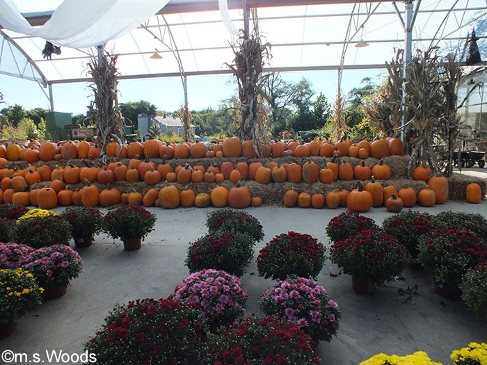 stonycreek-farm-pumpkin-harvest-festival