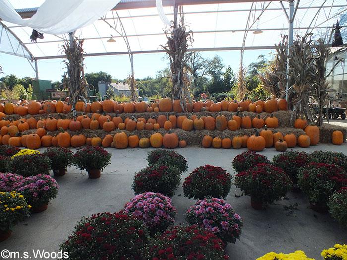 stonycreek-farm-pumpkin-harvest-festival
