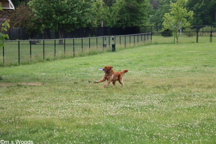 dog-in-paw-park-washington-twp-park-avon