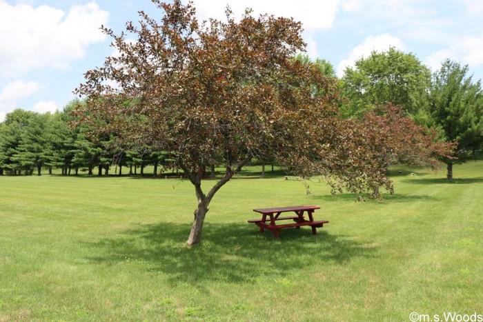 brandywine-park-picnic-table