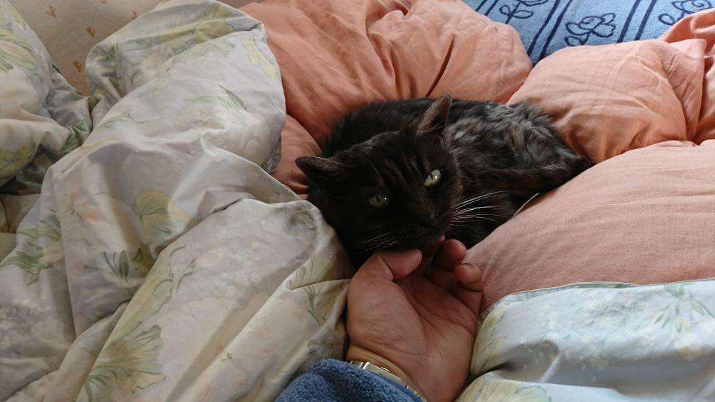 嫁の実家のネコ(19歳)