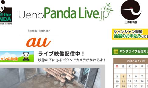 Ueno Panda Live