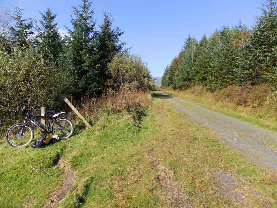 Bedwen - Beddgelert Forest MTB Trail