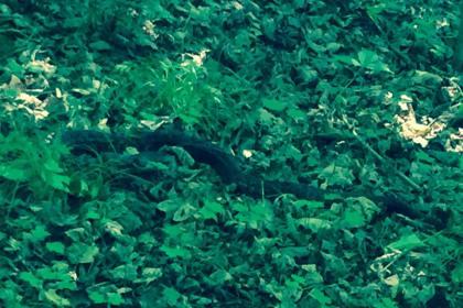 Rattlesnake seen on Route 66