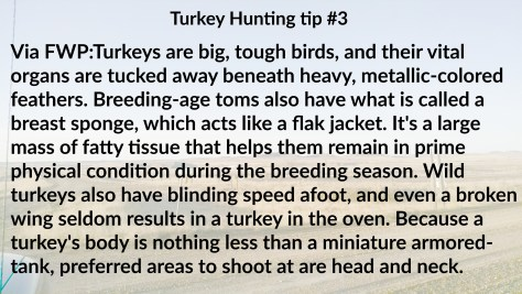 Turkey tip 3