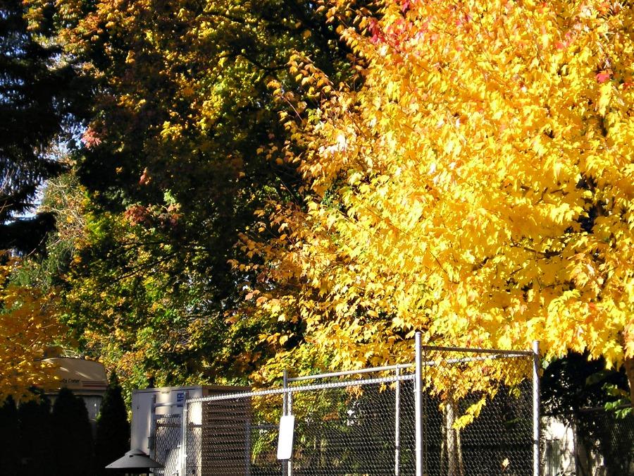 осень в Абботсфорде
