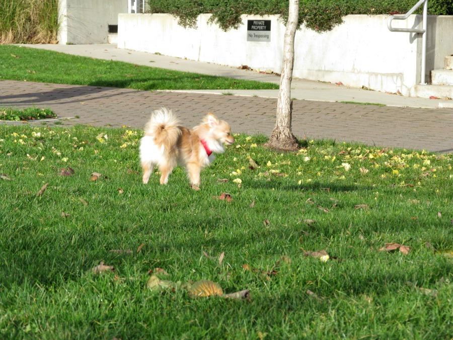 выгул собаки в Ванкувере