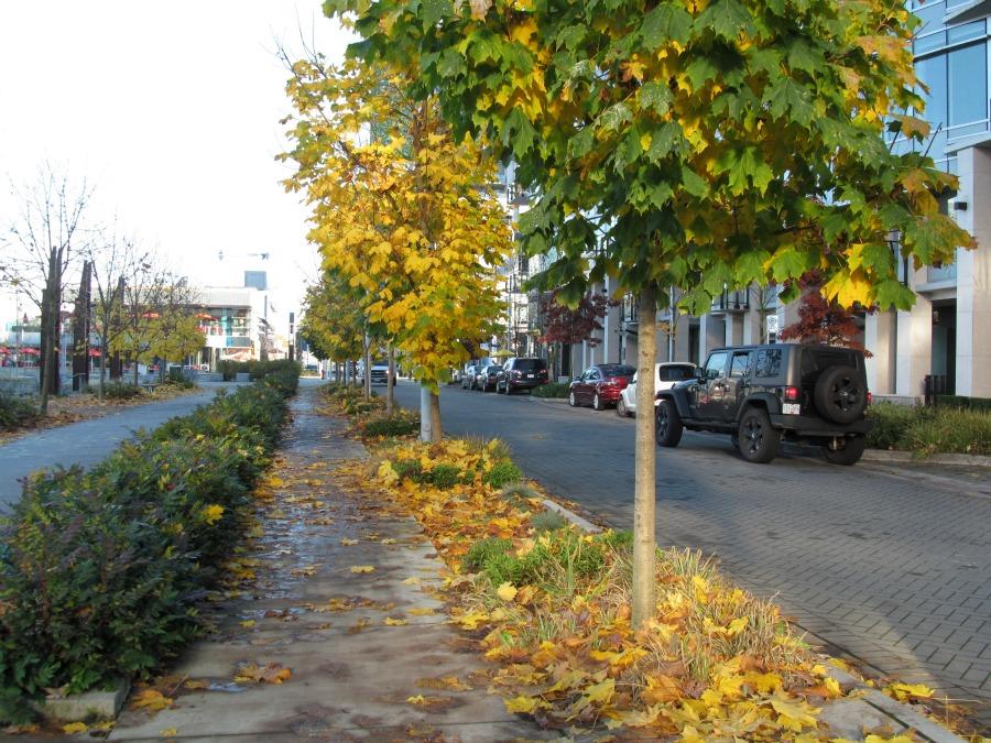 осень в олимпийской деревне