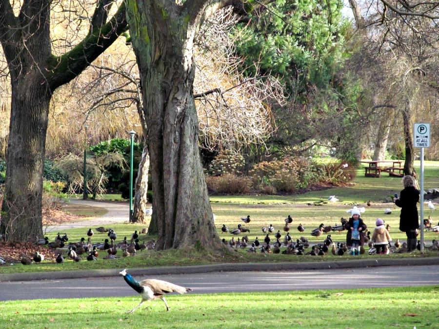животные на острове Ванкувер