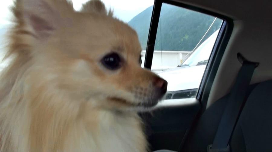 путешествуем с собакой