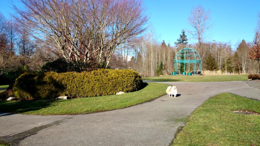 январь в Ванкувере