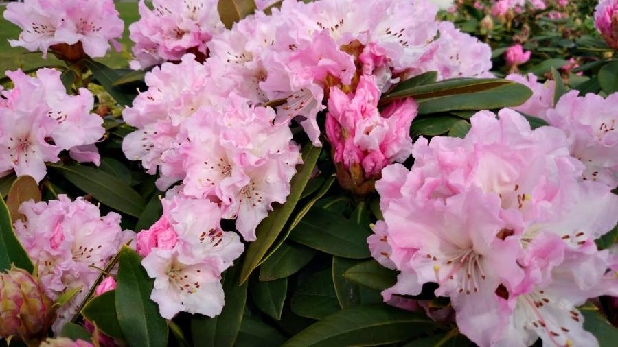 ванкуверская весна