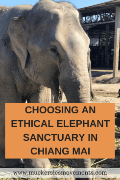 Choosing An Ethical Elephant Sanctuary In Chiang Mai