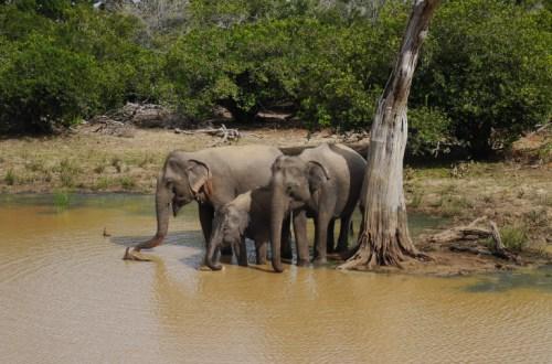 sri lanka safari yala