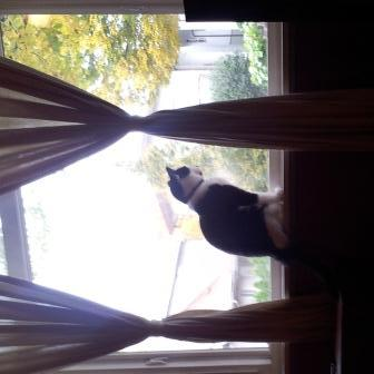 Zoey in the window rotated