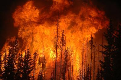 Picture of a wildfire in a forest