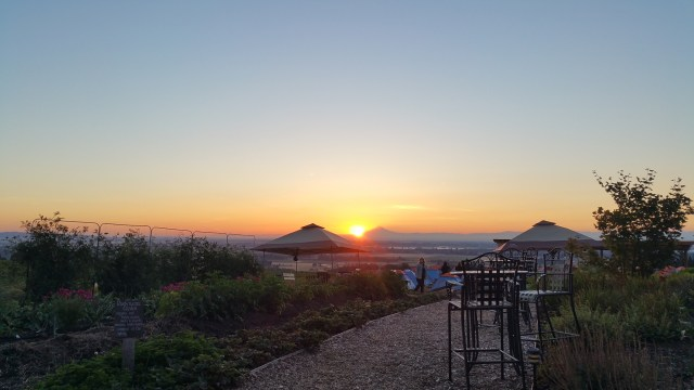 Sunrise over a winery