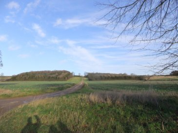 wolds_33_960