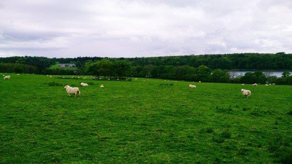 Menai_Bridge_Caernarfon_109