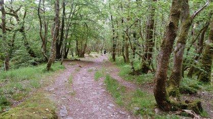 ardudwy way north009