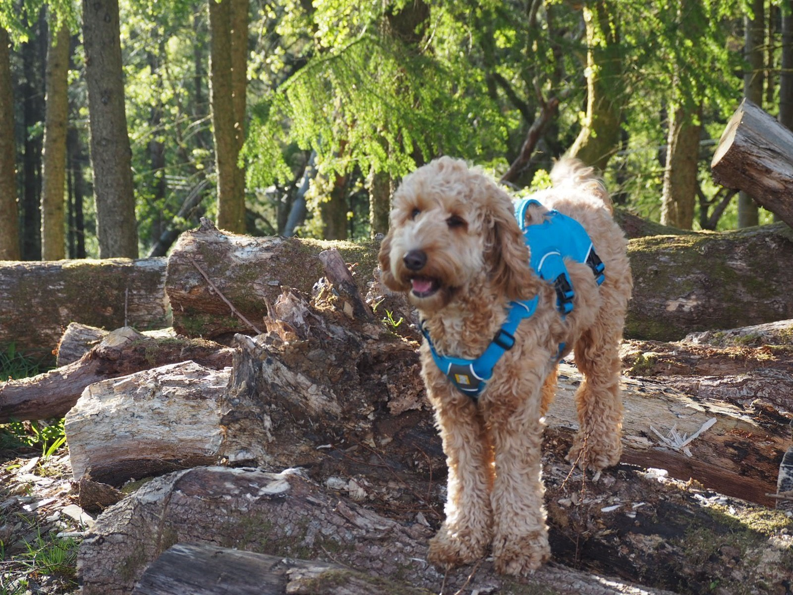 Ruffwear Web Master Harness Review