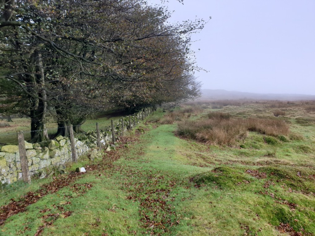 Brown_Clee_Hill_42