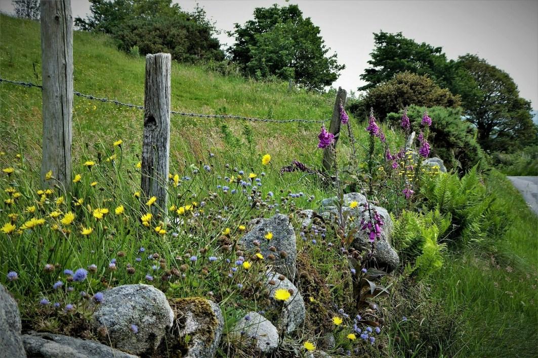 17.0 Walk up Cratlieve - Dromara Hills