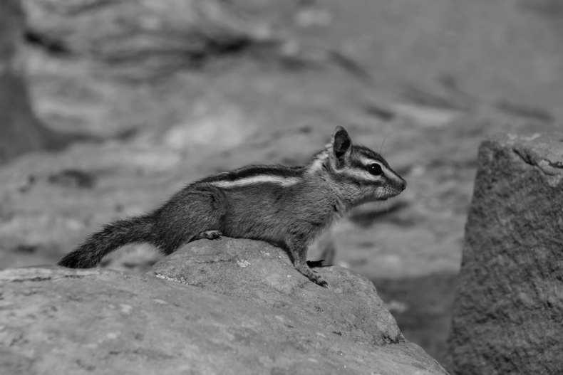 BW, USA, Utah, Zion Nationalpark