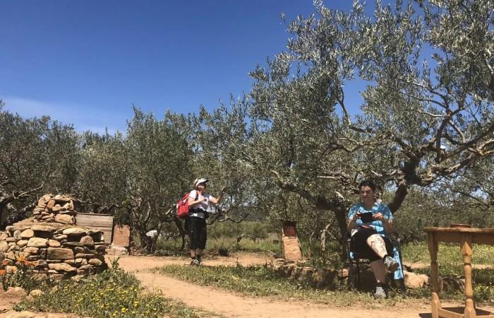 Pilger rasten unter Olivenbäumen