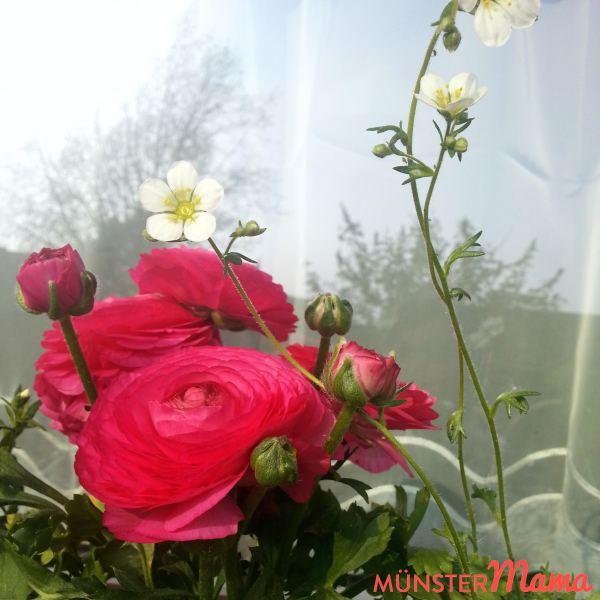 Auf der Fensterbank vorm Haus wachsen gerade wunderbar diese Ranunkeln. Sie erinnern mich gerade ständig an meinen Brautstrauß. *träum*