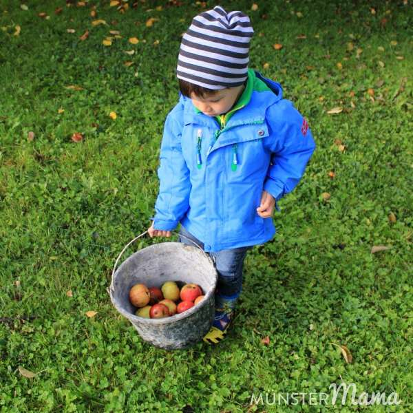 Apfelernte_muenstermama