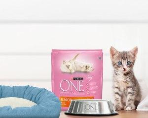 comedero y cama muestras gratis para gatos