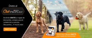 recibir muestras gratis mascotas